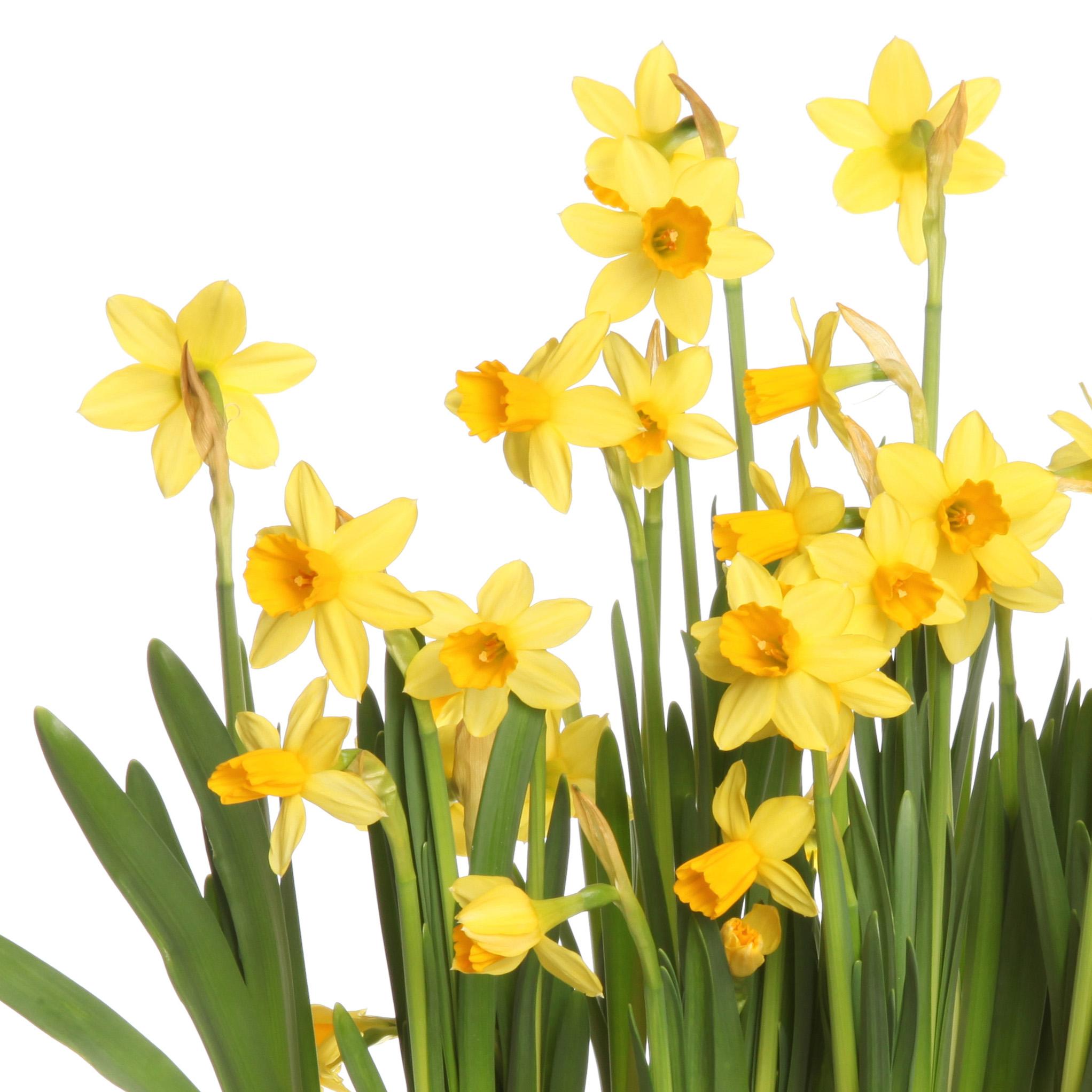 pääsiäinen-aukioloajat