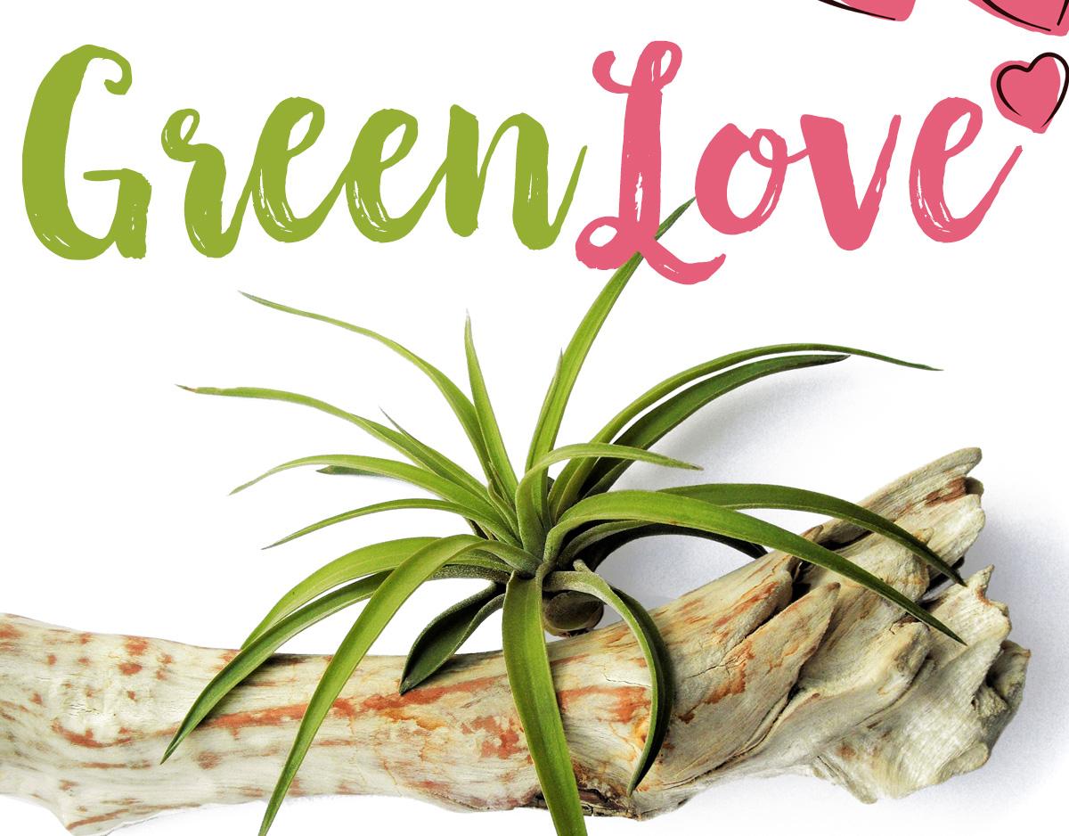 green-love-artikkelikuva